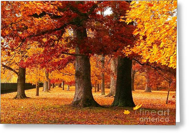 Indiana Autumn Greeting Cards - Tippecanoe Autumn Greeting Card by TAPS Photography