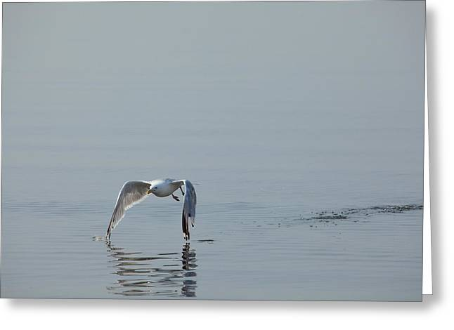 Flying Seagull Greeting Cards - Tips Touching Greeting Card by Karol  Livote