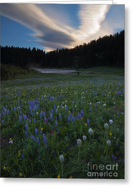 Anenome Greeting Cards - Tipsoo Sunrise Greeting Card by Mike  Dawson
