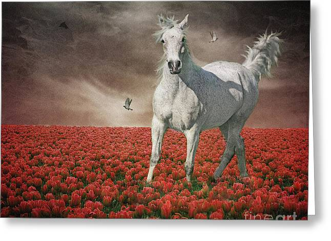 Fineartprint Greeting Cards - Tiptoe Through The Tulips Greeting Card by Wobblymol Davis