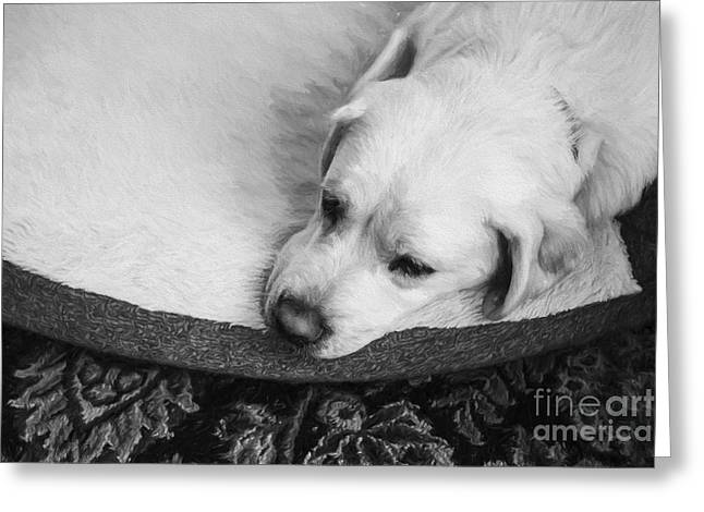 Sad Greeting Cards - Tired Pup Greeting Card by Diane Diederich
