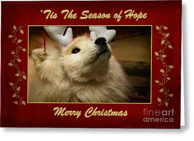 'tis The Season Of Hope Merry Christmas Greeting Card by Lois Bryan