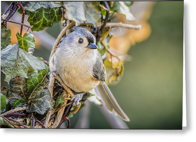 Wild Orchards Greeting Cards - Titmouse and Ivy Greeting Card by LeeAnn McLaneGoetz McLaneGoetzStudioLLCcom