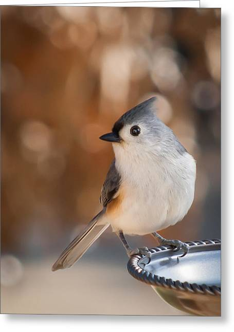 Jamesbarber Greeting Cards - Titmouse Greeting Card by James Barber