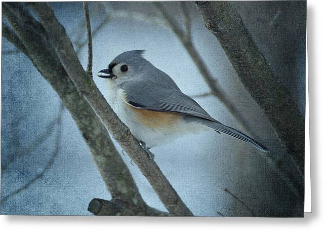 Tufted Titmouse Greeting Cards - Titmouse Greeting Card by Sandy Keeton