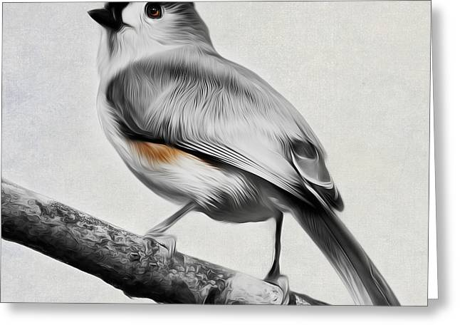 Backyard Wildlife Greeting Cards - Titmouse Square Greeting Card by Bill  Wakeley