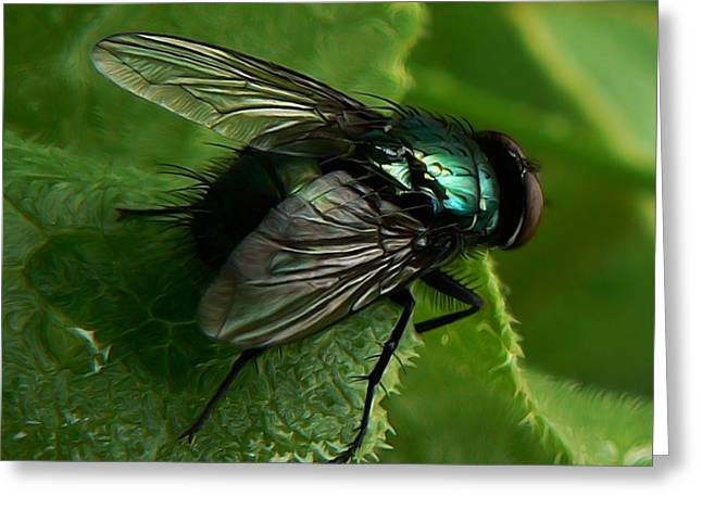 To be the Fly on the Salad Greens Greeting Card by Barbara St Jean
