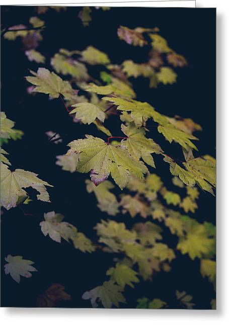 Red Leaves Greeting Cards - To Have You Near Greeting Card by Laurie Search