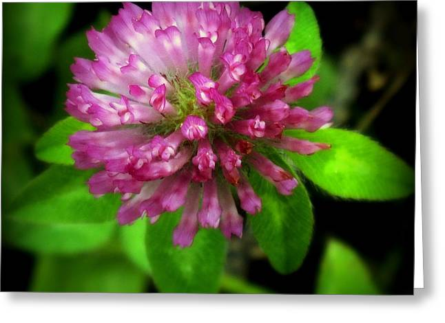 Edibles Greeting Cards - To Remember Clover Greeting Card by Karen Wiles