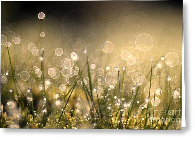 Green Blade Of Grass Greeting Cards - To sparkle Greeting Card by Jana Behr