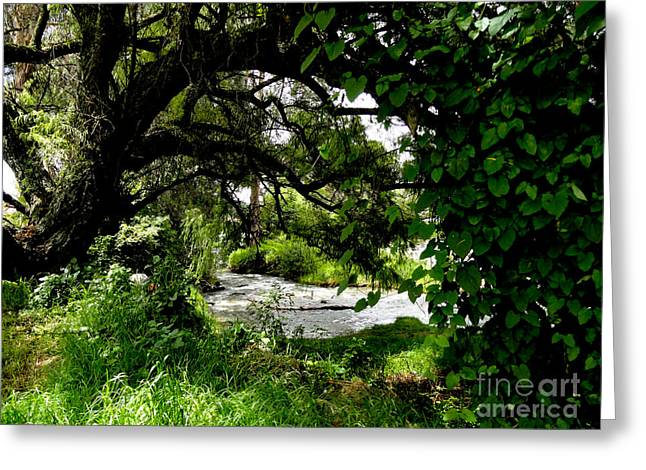 Green Foliage Greeting Cards - To The Amazon Greeting Card by Al Bourassa