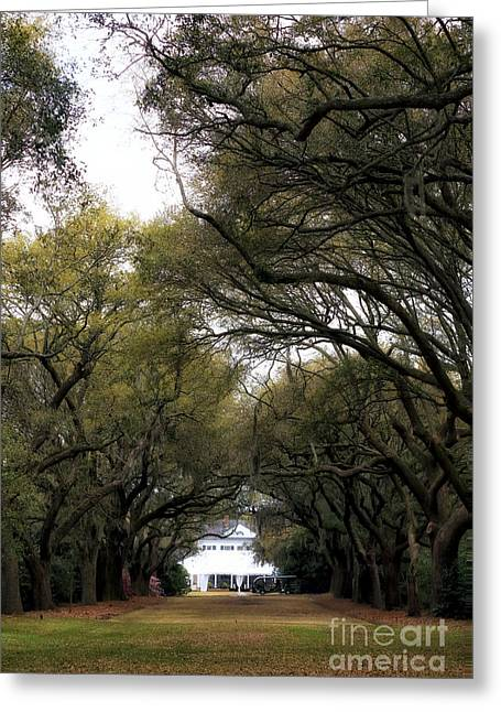 Southern Oak Trees Of The Old South Greeting Cards - To the Legare Waring House Greeting Card by John Rizzuto