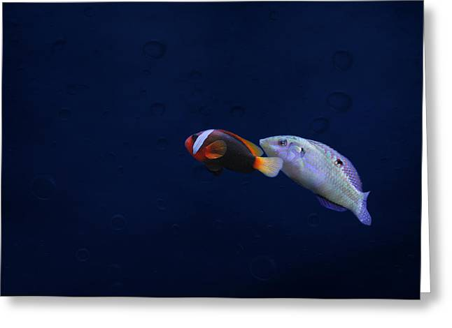 Clown Fish Photographs Greeting Cards - To the light Greeting Card by Heike Hultsch
