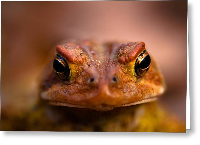 Toad Greeting Cards - Toadally Greeting Card by Shane Holsclaw