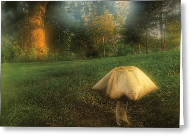 Toadstools Greeting Cards - Toadstool In Fog Greeting Card by Don Wolf