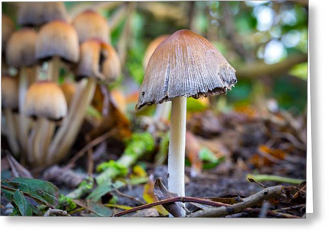 Toadstools Greeting Cards - Toadstool. Greeting Card by Gary Gillette