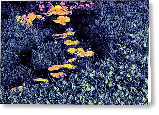 Toadstools Digital Greeting Cards - Toadstools At Night Greeting Card by Eric Forster
