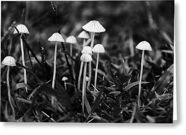 Toadstools Greeting Cards - Toadstools V3 Greeting Card by Douglas Barnard