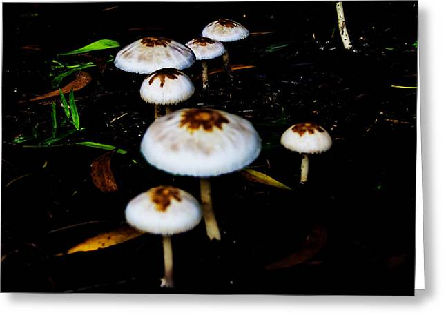 Toadstools Greeting Cards - Toadstools V4 Greeting Card by Douglas Barnard