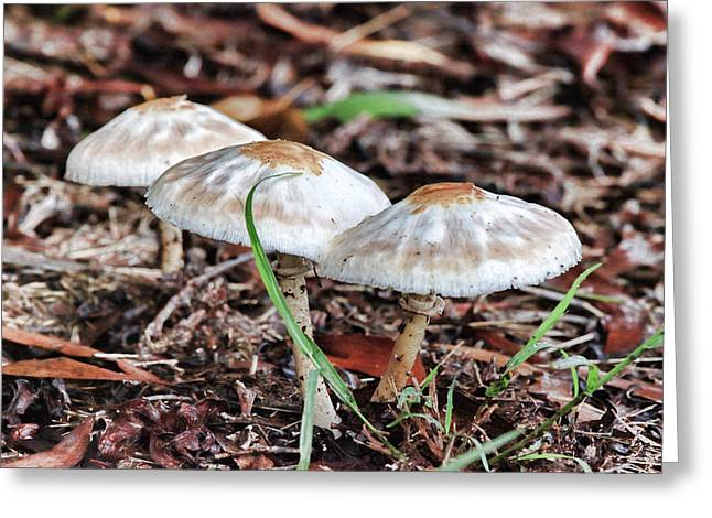 Toadstools V7 Greeting Card by Douglas Barnard