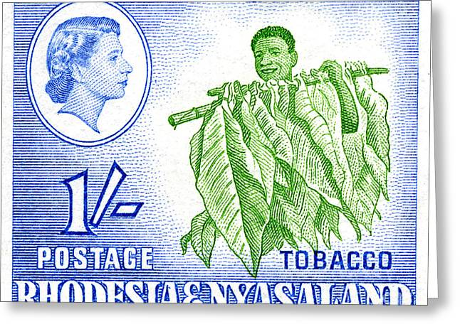 Zimbabwe Greeting Cards - Tobacco - 1s Crop Greeting Card by Outpost Imagery