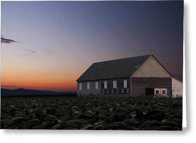 Tobacco Barns Greeting Cards - Tobacco Field Greeting Card by Andrea Galiffi