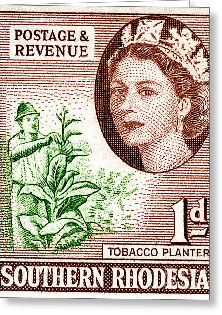Zimbabwe Greeting Cards - Tobacco Planter - 1d Crop Greeting Card by Outpost Imagery