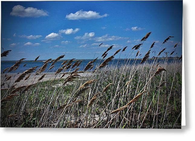 Mikki Cucuzzo Greeting Cards - Tobay Beach LI Greeting Card by Mikki Cucuzzo