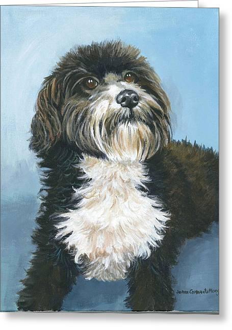 Cute Havanese Greeting Cards - Toby Havanese dog Greeting Card by JoAnn   Morgan