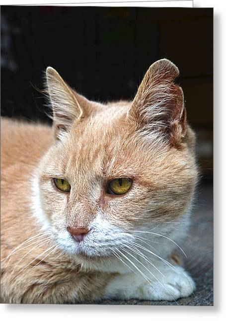 Toby The Old Mill Mouser Greeting Card by Sandi OReilly