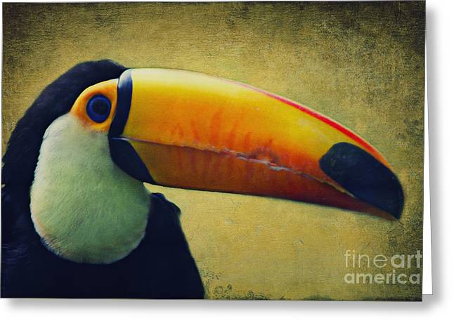 Tropical Rainforests Mixed Media Greeting Cards - Toco Toucan Greeting Card by Angela Doelling AD DESIGN Photo and PhotoArt