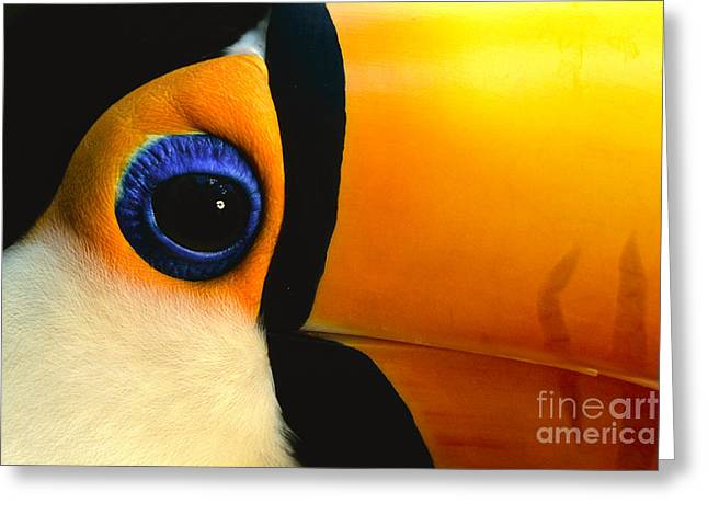 Animal Body Part Greeting Cards - Toco toucan face Greeting Card by Frans Lanting MINT Images