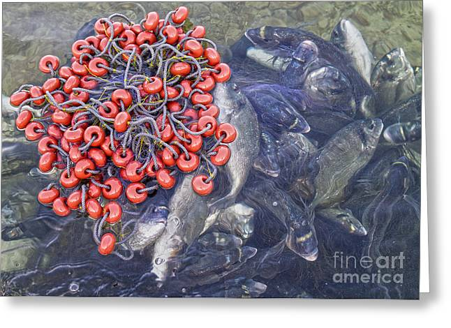 Life Line Photographs Greeting Cards - Todays Harvest Greeting Card by Stylianos Kleanthous