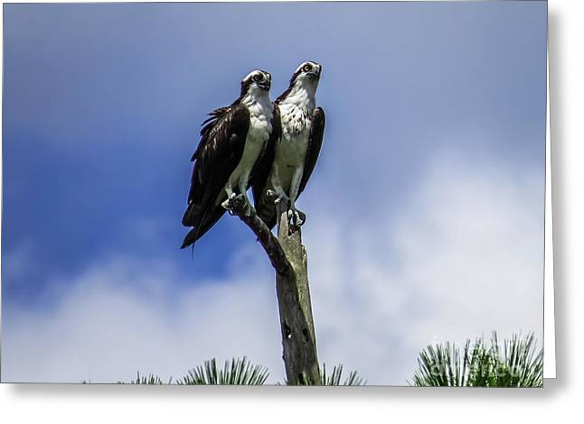 Hunting Bird Greeting Cards - Together again Greeting Card by Zina Stromberg