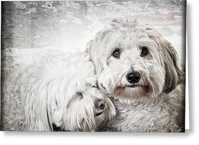 Dog Portraits Greeting Cards - Together Greeting Card by Elena Elisseeva