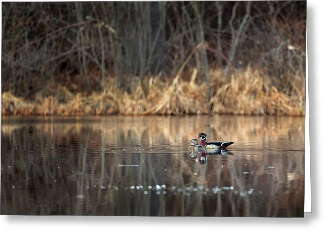 Wood Duck Greeting Cards - Together In The Swamp Greeting Card by Bill  Wakeley