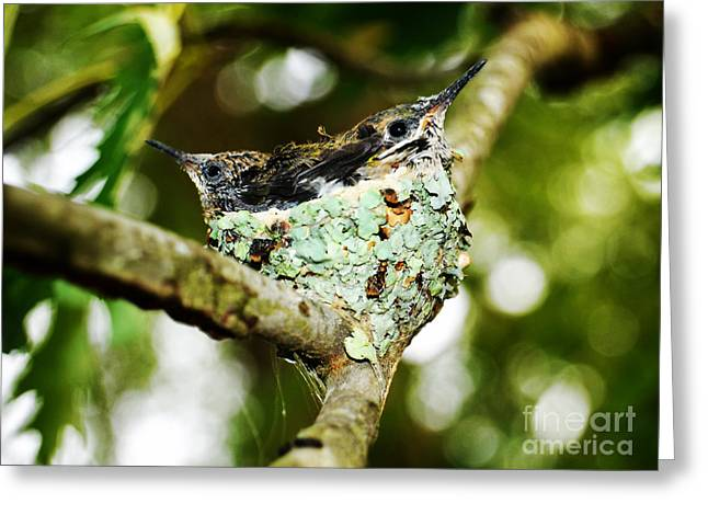 Togetherness Baby Humming Birds Greeting Card by Peggy  Franz
