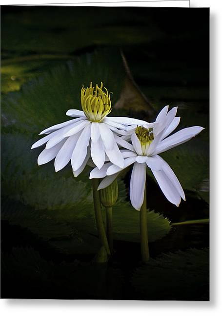 Water Lily Pond Greeting Cards - Togetherness Greeting Card by Holly Kempe