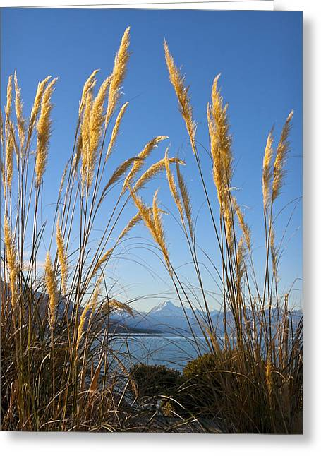 Aotearoa Greeting Cards - Toitoi and mountain Greeting Card by Jenny Setchell