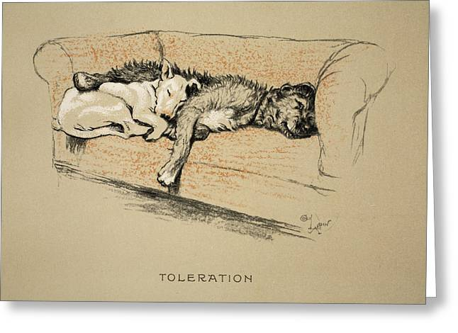Bull Terrier Greeting Cards - Toleration, 1930, 1st Edition Greeting Card by Cecil Charles Windsor Aldin