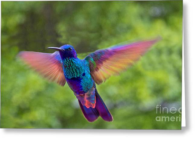 Hovering Greeting Cards - Tom Thumb Showing Off Greeting Card by Al Bourassa