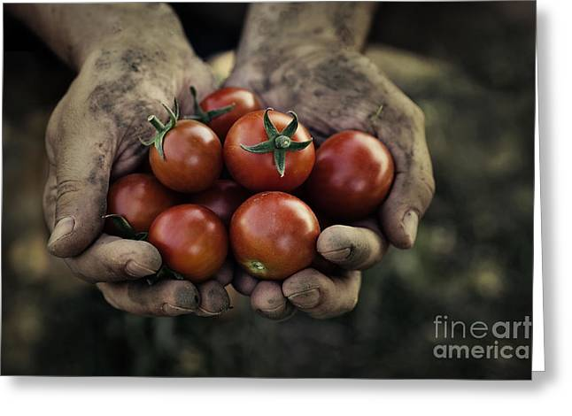 Mythja Greeting Cards - Tomato harvest Greeting Card by Mythja  Photography