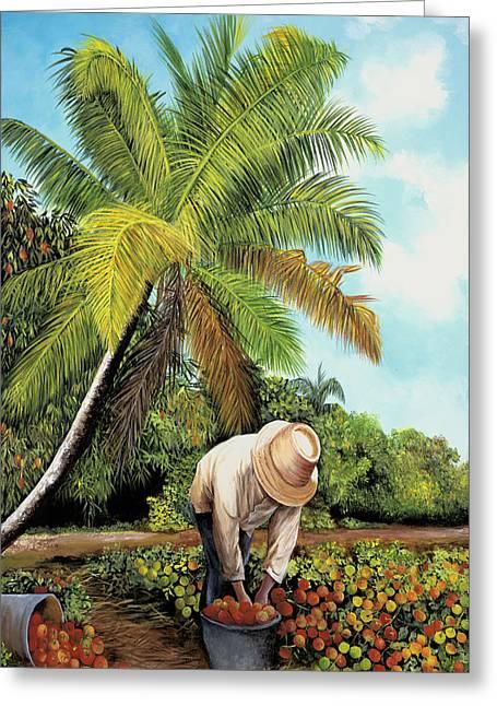 Tomato Picker Greeting Card by Dominica Alcantara