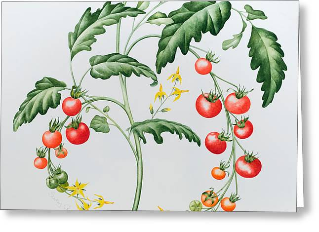 Fruit On The Vine Greeting Cards - Tomatoes Greeting Card by Sally Crosthwaite