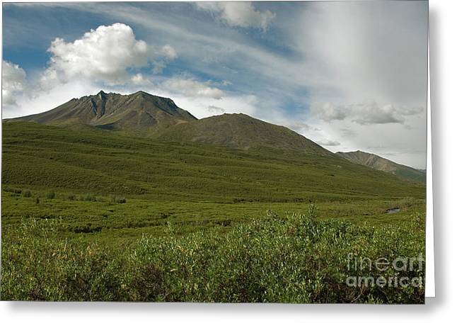 Tombstone Provincial Park Greeting Card by Mark Newman