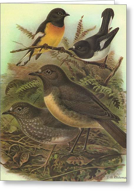 J.g. Greeting Cards - Tomtit and Robin Greeting Card by J G Keulemans