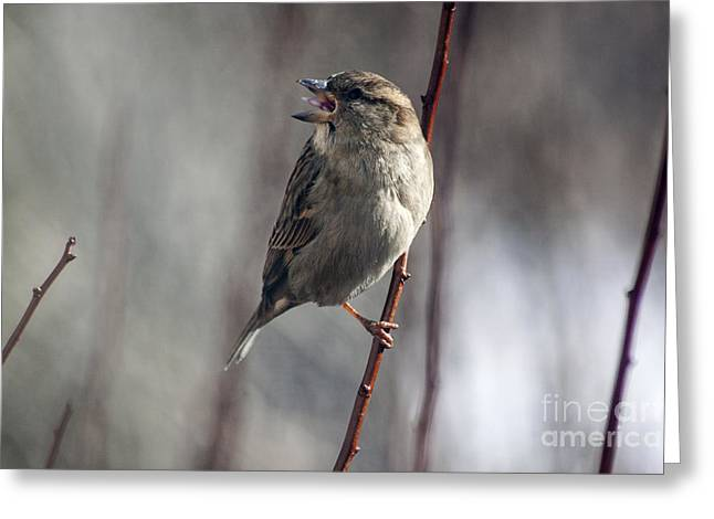 Cut-outs Greeting Cards - Tongue of the Sparrow Greeting Card by Janice Rae Pariza