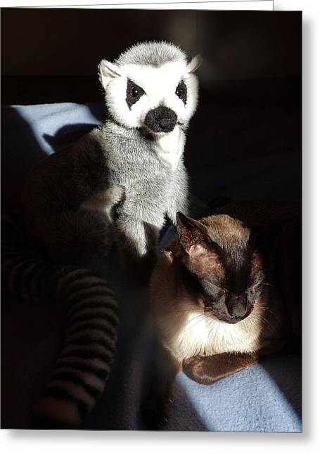 Tonkinese Greeting Cards - Tonkinese With Companion Greeting Card by Margaret Saheed