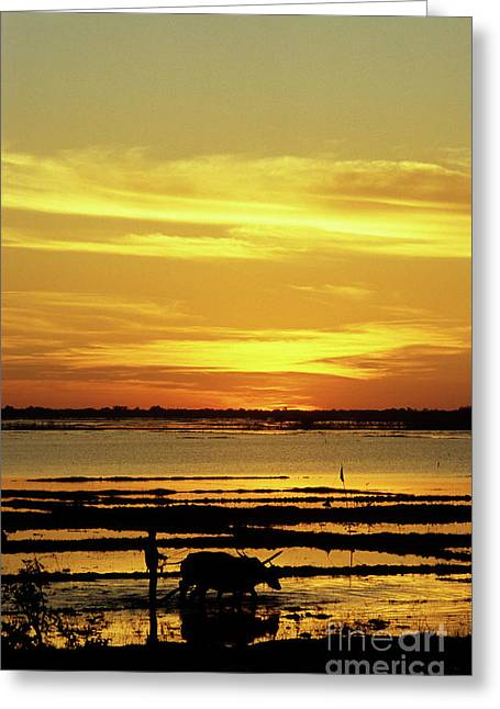Tonle Greeting Cards - Tonle Sap Sunrise 02 Greeting Card by Rick Piper Photography