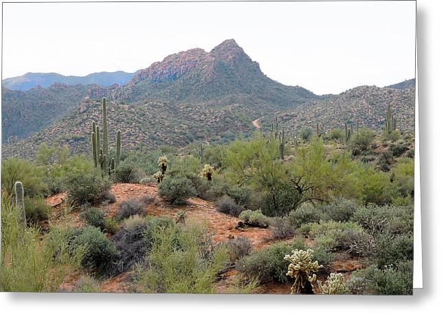 Cave Creek Western Greeting Cards - Tonto National Forest Greeting Card by Gordon Beck